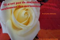 Proverbe 26 petit