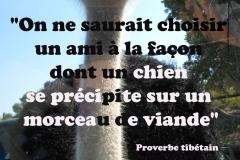 Proverbe 57 petit
