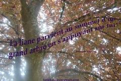 Proverbe-7-petit