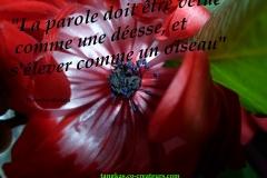 Proverbe 9 petit